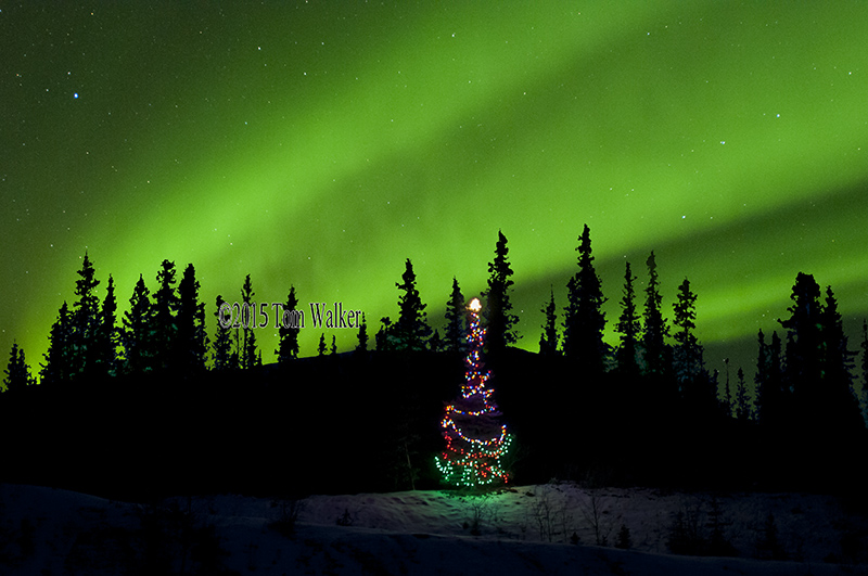Aurora Christmas Tree, Alaska #4157